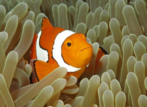 Keep Dory Swimming - CoralGardening
