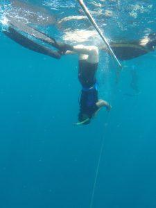 Vera starts here free immersion dive