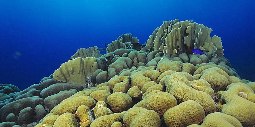 DW-Coral-rif 2000