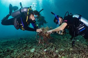 Underwater clean-up around Koh Tha Thailand