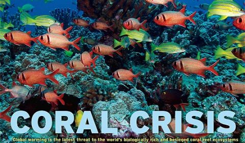 CoralCrisis