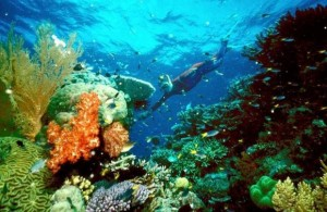 - UNDATED FILE PHOTO - A tourist swims on the Great Barrier Reef in this undated file picture. Fishi..