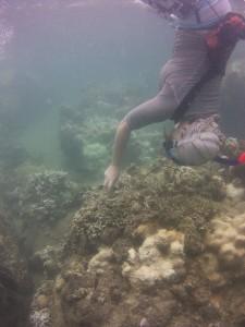 Netten verwijderen van het koraal