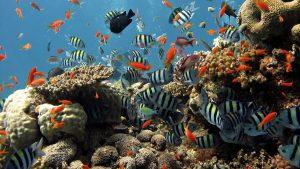Alle vissen en hun uitwerpselen zijn van belang voor een mooi koraalrif.