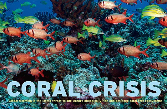 7 tips wat jij kan doen om koraalriffen te beschermen.