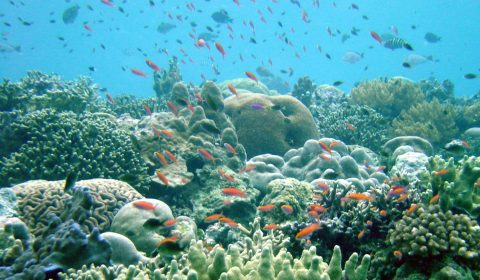 Beautiful healthy reef