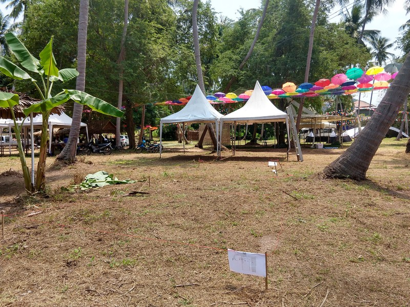 The empty coconut field North in Sairee is transferred to the free Save Koh Tao festival.