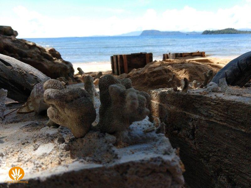 Dood koraal in het betonnen blok