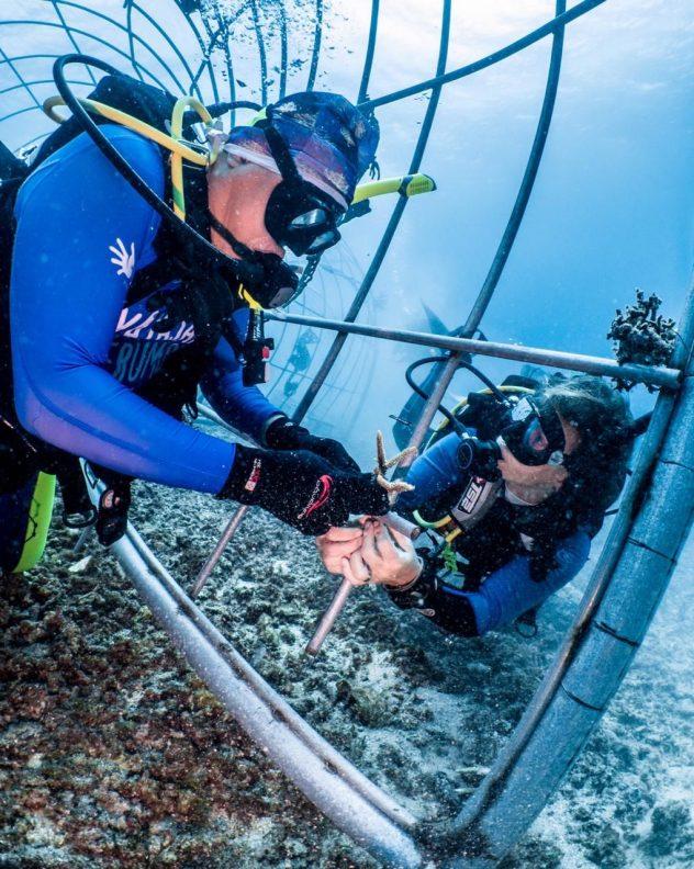 Teguh bevestigd het eerste stuk koraal, onder het toeziend oog van Vera.