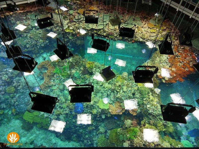 Koraal aquarium bij Burgers' Ocean