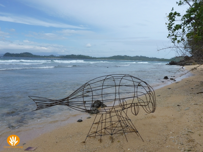 The dugong on the beach.