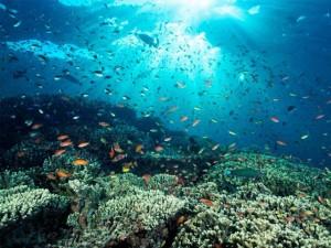 Coral Reefs Garden Gardening Dos Winkel