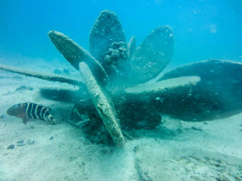 Daar staat hij dan: de tweede bloem van de Coralgarden.