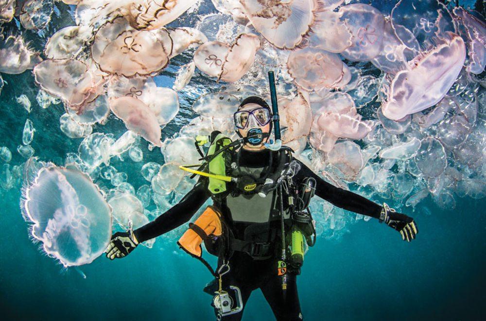 Een oceaan vol kwallen is de voorspelling voor 2050