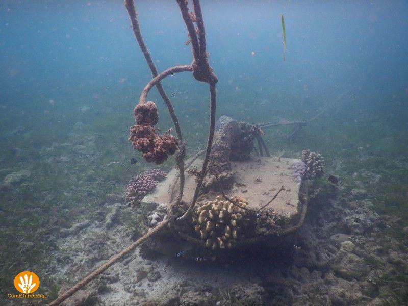 Beton blok waar koraal op groeit