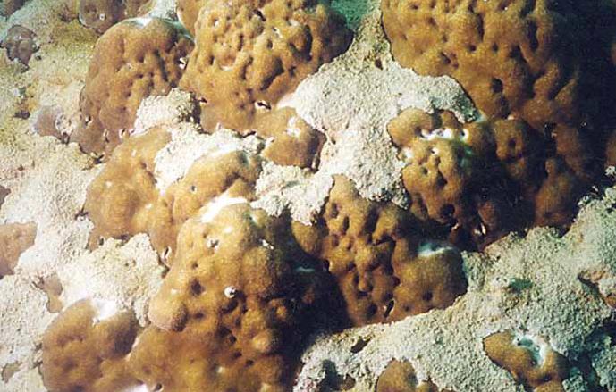 Coral Reef Degradation - Sedimentation (by Ross Jones)