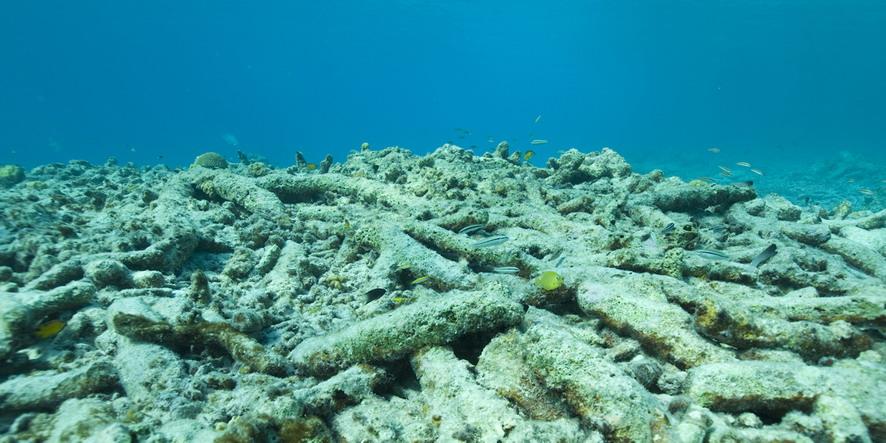 DW-Coral-rif 2012