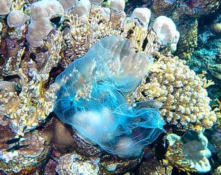 bag-in-coral-reef