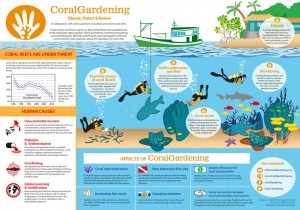 A4 - infographic coral gardening - 160112s