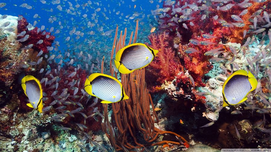 The entire ecosystem is essential for a healthy reef