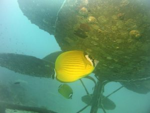 An other butterflyfish lives below the flower. Corrected in Picture Fix.