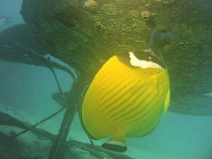 A butterflyfish lives below the flower (corrected).